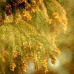花粉症情報