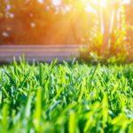 芝生を張る時期は、3~5月が最適。