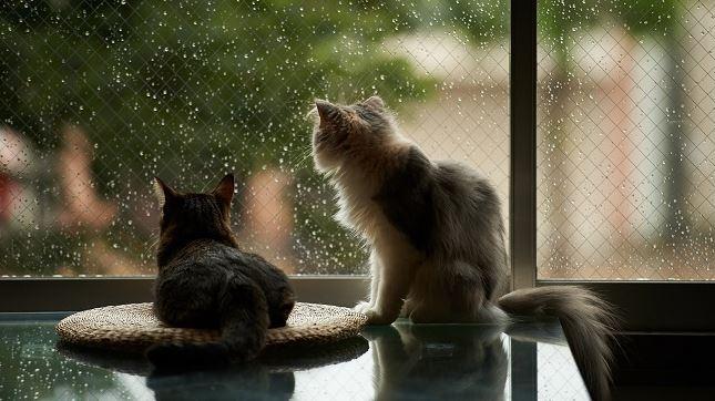 梅雨だからこそラクにできる家事
